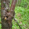 godfrey_artifacts-in-trees-category-d