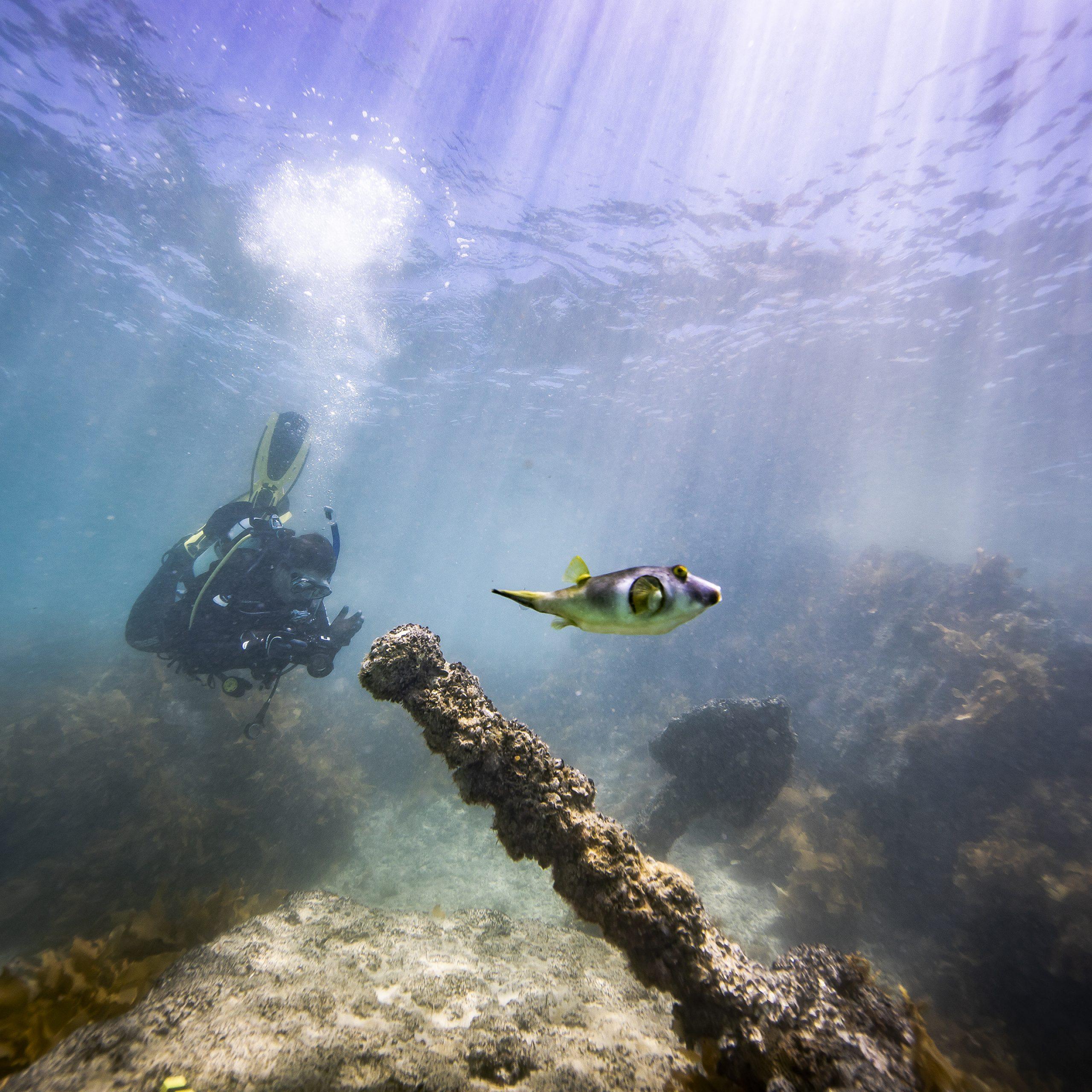 teaching underwater photogrammetry